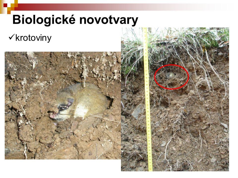 krotoviny Biologické novotvary