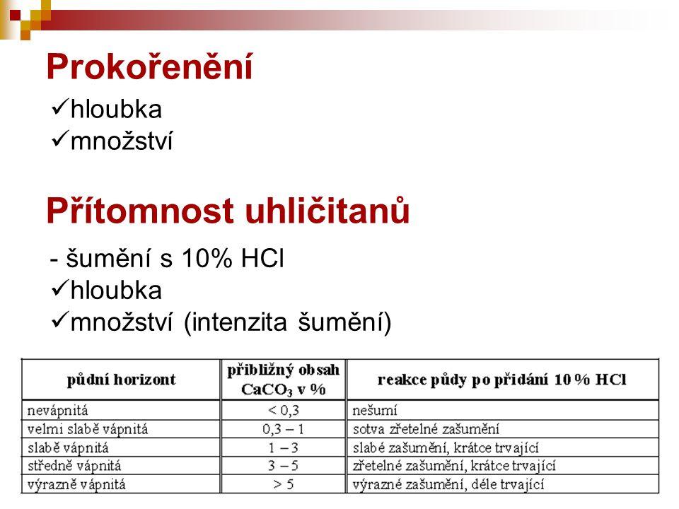 hloubka množství Prokořenění - šumění s 10% HCl hloubka množství (intenzita šumění) Přítomnost uhličitanů