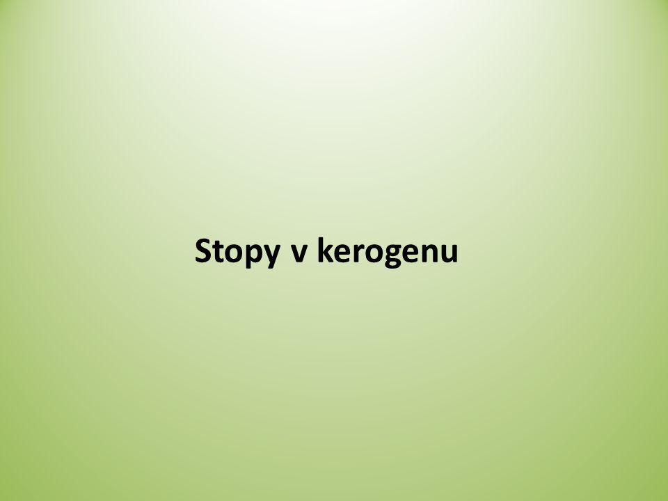 Stopy v kerogenu