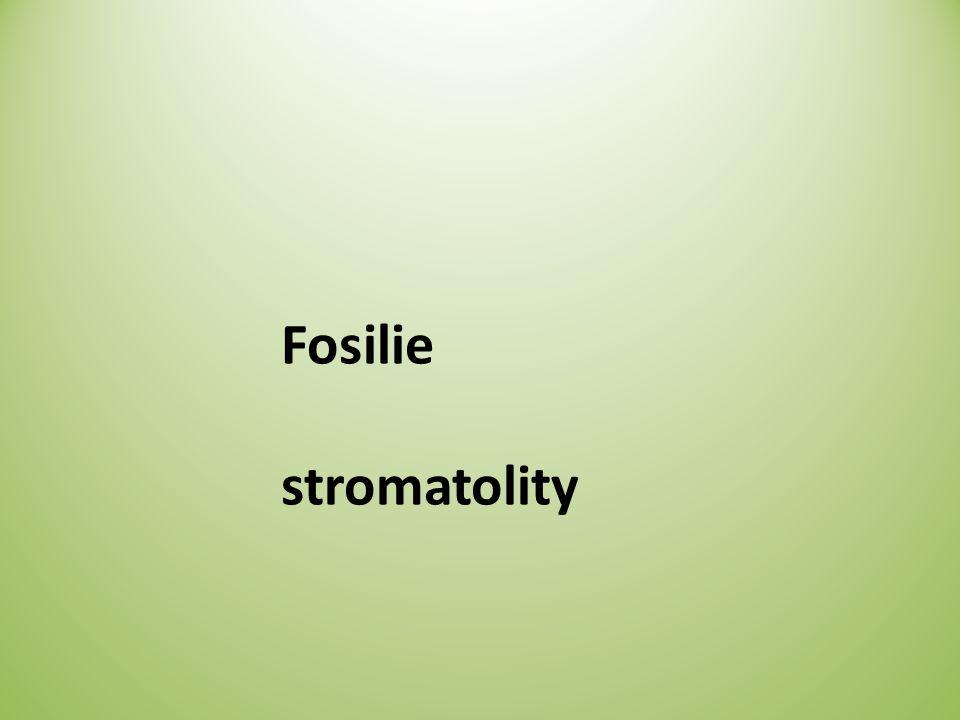 Fosilie stromatolity