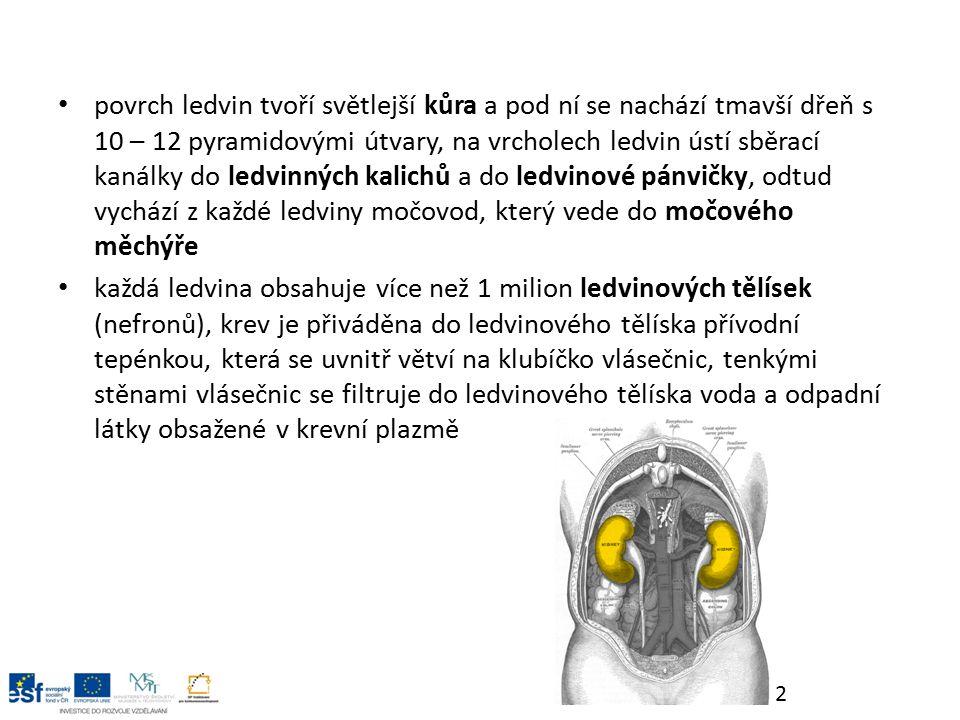 vzniká primární moč, která prochází soustavou kanálku, v nich se vstřebává zpět do krve většina vody, cukr a sodné ionty ve sběracím kanálku se moč zahustí a vzniká definitivní moč, jejíž hlavní součástí je močovina, definitivní moč odtéká přes ledvinovou pánvičku močovodem do močového měchýře denně se u člověk vytvoří asi 1,5 litru moči močovody jsou trubice asi 25 cm dlouhé a spojují obě ledviny s močovým měchýřem, moč tudy protéká díky peristaltickým pohybům hladké svaloviny 3