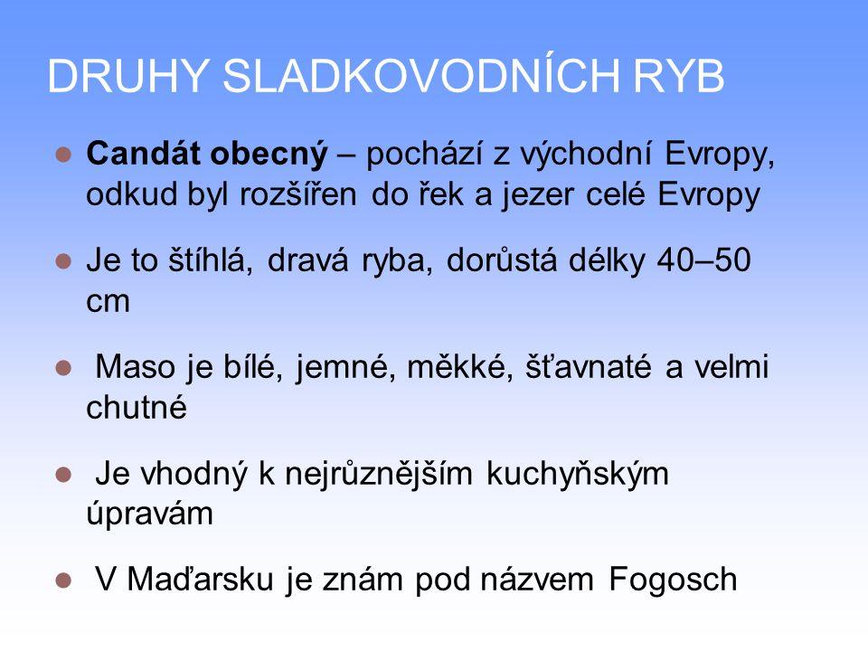 DRUHY SLADKOVODNÍCH RYB Candát obecný – pochází z východní Evropy, odkud byl rozšířen do řek a jezer celé Evropy Je to štíhlá, dravá ryba, dorůstá délky 40–50 cm Maso je bílé, jemné, měkké, šťavnaté a velmi chutné Je vhodný k nejrůznějším kuchyňským úpravám V Maďarsku je znám pod názvem Fogosch