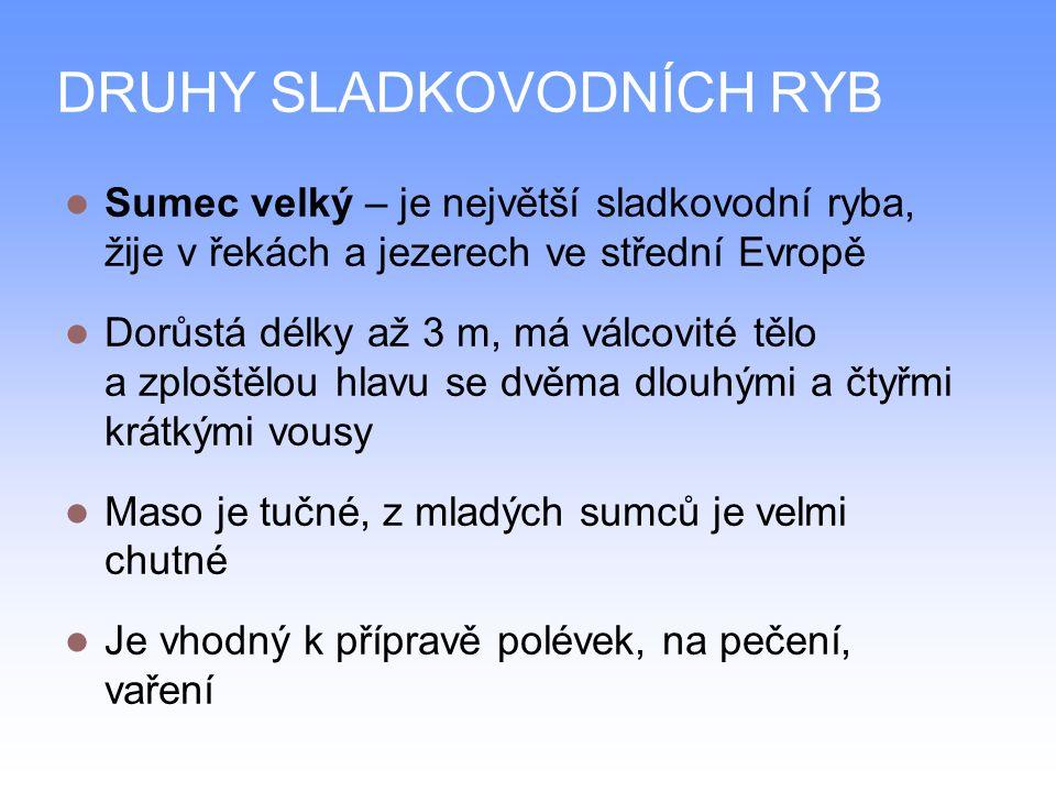 DRUHY SLADKOVODNÍCH RYB Sumec velký – je největší sladkovodní ryba, žije v řekách a jezerech ve střední Evropě Dorůstá délky až 3 m, má válcovité tělo a zploštělou hlavu se dvěma dlouhými a čtyřmi krátkými vousy Maso je tučné, z mladých sumců je velmi chutné Je vhodný k přípravě polévek, na pečení, vaření