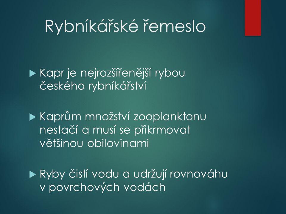 Rybníkářské řemeslo  Kapr je nejrozšířenější rybou českého rybníkářství  Kaprům množství zooplanktonu nestačí a musí se přikrmovat většinou obilovinami  Ryby čistí vodu a udržují rovnováhu v povrchových vodách