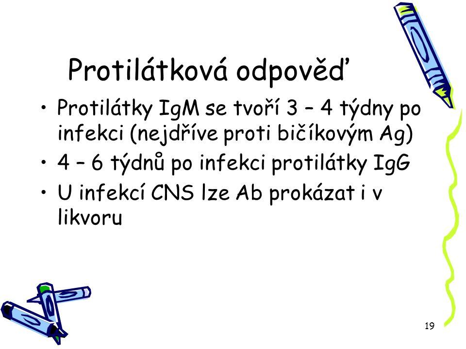 19 Protilátková odpověď Protilátky IgM se tvoří 3 – 4 týdny po infekci (nejdříve proti bičíkovým Ag) 4 – 6 týdnů po infekci protilátky IgG U infekcí CNS lze Ab prokázat i v likvoru