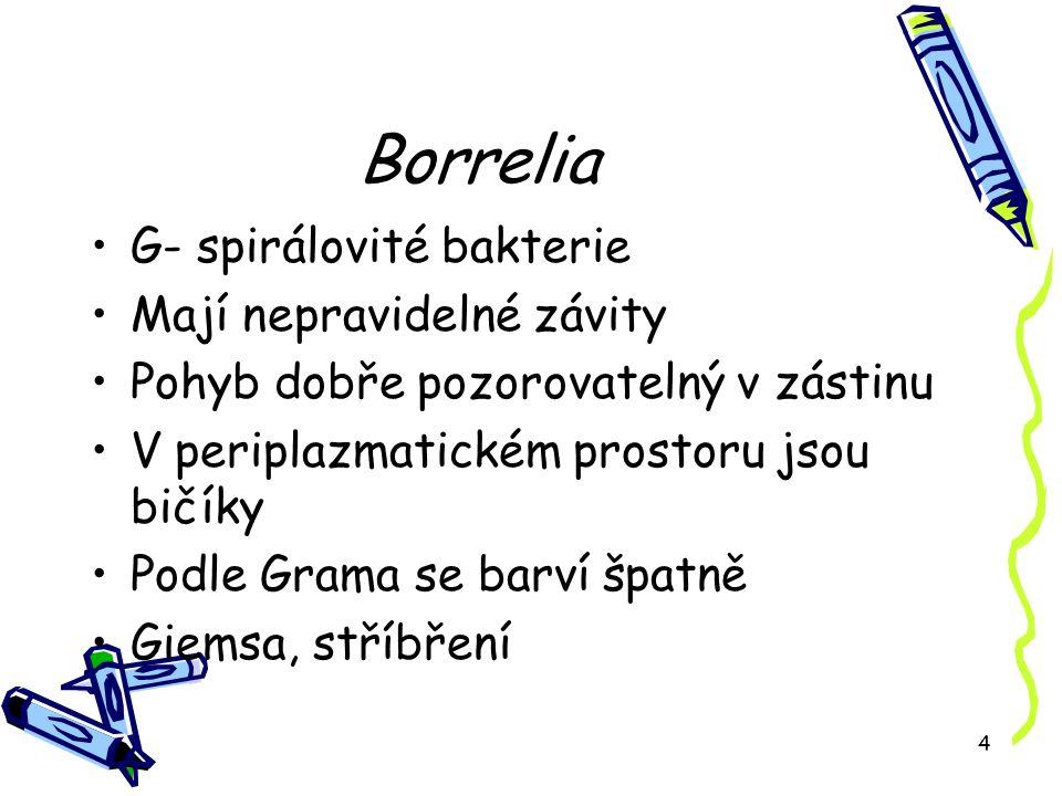 4 Borrelia G- spirálovité bakterie Mají nepravidelné závity Pohyb dobře pozorovatelný v zástinu V periplazmatickém prostoru jsou bičíky Podle Grama se barví špatně Giemsa, stříbření