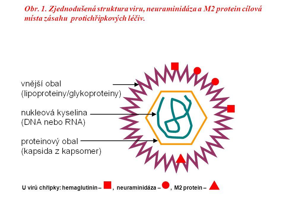 Obr. 1. Zjednodušená struktura viru, neuraminidáza a M2 protein cílová místa zásahu protichřipkových léčiv. U virů chřipky: hemaglutinin –, neuraminid
