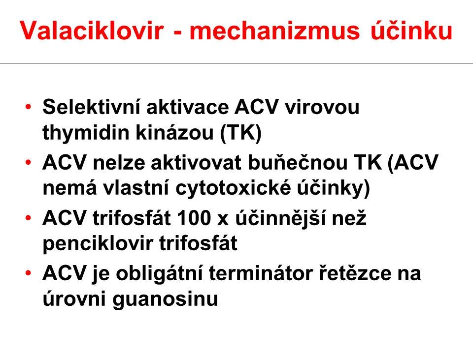 Valaciklovir - mechanizmus účinku Selektivní aktivace ACV virovou thymidin kinázou (TK) ACV nelze aktivovat buňečnou TK (ACV nemá vlastní cytotoxické účinky) ACV trifosfát 100 x účinnější než penciklovir trifosfát ACV je obligátní terminátor řetězce na úrovni guanosinu
