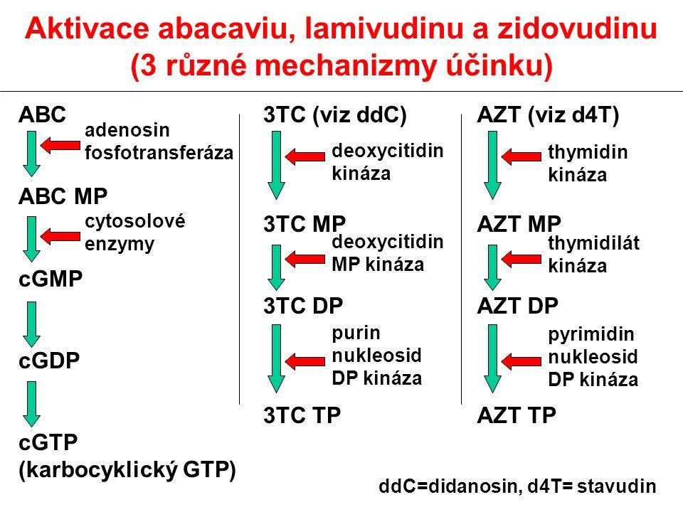 Aktivace abacaviu, lamivudinu a zidovudinu (3 různé mechanizmy účinku) ABC ABC MP cGMP cGDP cGTP (karbocyklický GTP) 3TC (viz ddC) 3TC MP 3TC DP 3TC TP AZT (viz d4T) AZT MP AZT DP AZT TP adenosin fosfotransferáza cytosolové enzymy deoxycitidin kináza deoxycitidin MP kináza purin nukleosid DP kináza thymidin kináza thymidilát kináza pyrimidin nukleosid DP kináza ddC=didanosin, d4T= stavudin