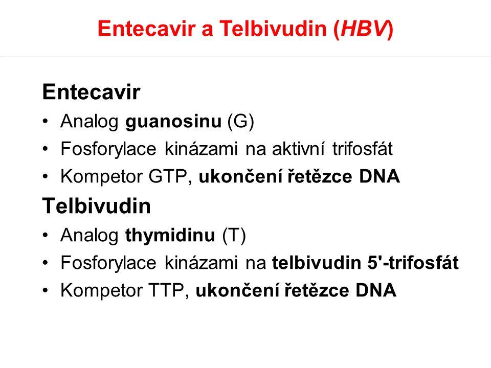 Entecavir Analog guanosinu (G) Fosforylace kinázami na aktivní trifosfát Kompetor GTP, ukončení řetězce DNA Telbivudin Analog thymidinu (T) Fosforylac