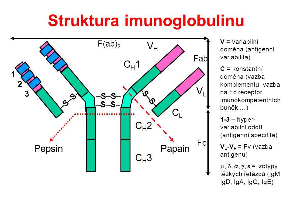 Struktura imunoglobulinu Fab Fc F(ab) 2 VHVH VLVL CLCL CH1CH1 –S–S– CH2CH2 CH3CH3 PapainPepsin V = variabilní doména (antigenní variabilita) C = konstantní doména (vazba komplementu, vazba na Fc receptor imunokompetentních buněk …) 1-3 – hyper- variabilní oddíl (antigenní specifita) V L -V H = Fv (vazba antigenu)  = izotypy těžkých řetězců (IgM, IgD, IgA, IgG, IgE) 1 2 3