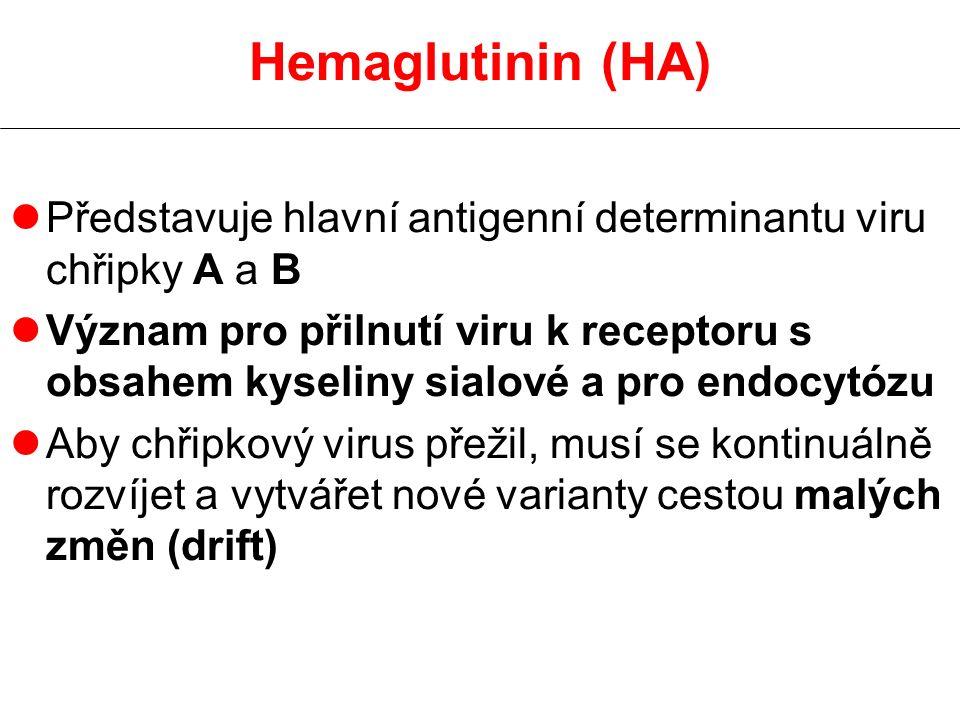 Hemaglutinin (HA) lPředstavuje hlavní antigenní determinantu viru chřipky A a B lVýznam pro přilnutí viru k receptoru s obsahem kyseliny sialové a pro endocytózu lAby chřipkový virus přežil, musí se kontinuálně rozvíjet a vytvářet nové varianty cestou malých změn (drift)