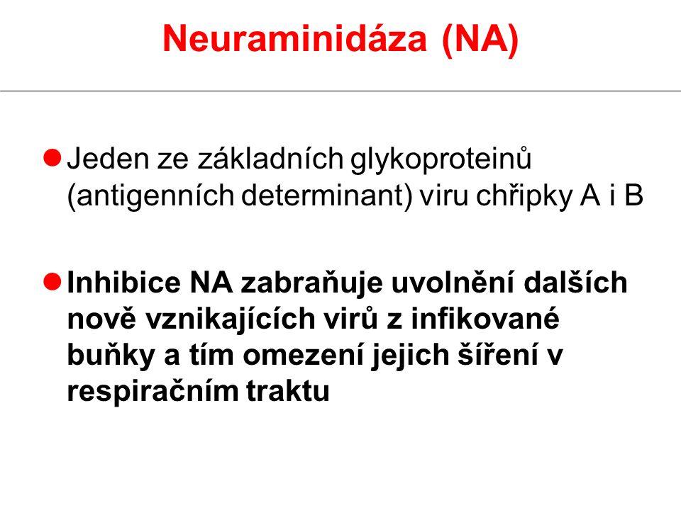 Neuraminidáza (NA) lJeden ze základních glykoproteinů (antigenních determinant) viru chřipky A i B lInhibice NA zabraňuje uvolnění dalších nově vznikajících virů z infikované buňky a tím omezení jejich šíření v respiračním traktu