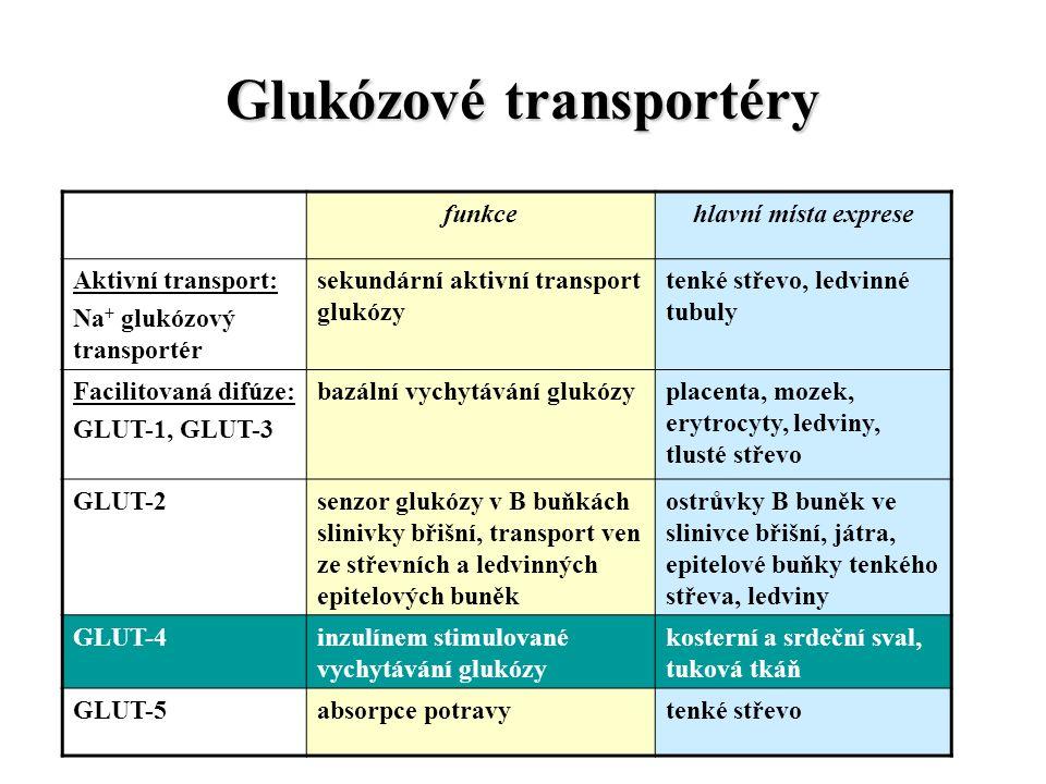 Glukózové transportéry funkcehlavní místa exprese Aktivní transport: Na + glukózový transportér sekundární aktivní transport glukózy tenké střevo, ledvinné tubuly Facilitovaná difúze: GLUT-1, GLUT-3 bazální vychytávání glukózyplacenta, mozek, erytrocyty, ledviny, tlusté střevo GLUT-2senzor glukózy v B buňkách slinivky břišní, transport ven ze střevních a ledvinných epitelových buněk ostrůvky B buněk ve slinivce břišní, játra, epitelové buňky tenkého střeva, ledviny GLUT-4inzulínem stimulované vychytávání glukózy kosterní a srdeční sval, tuková tkáň GLUT-5absorpce potravytenké střevo