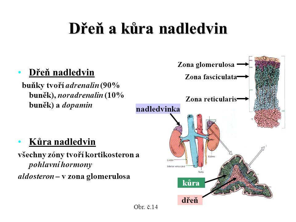 Dřeň a kůra nadledvin Dřeň nadledvin buňky tvoří adrenalin (90% buněk), noradrenalin (10% buněk) a dopamin Kůra nadledvin všechny zóny tvoří kortikosteron a pohlavní hormony aldosteron – v zona glomerulosa Zona glomerulosa Zona fasciculata Zona reticularis nadledvinka kůra dřeň Obr.