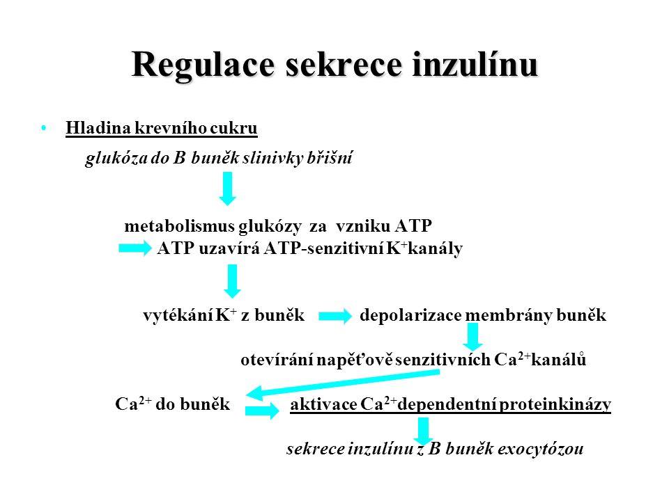 Regulace sekrece inzulínu Hladina krevního cukru glukóza do B buněk slinivky břišní metabolismus glukózy za vzniku ATP ATP uzavírá ATP-senzitivní K + kanály vytékání K + z buněk depolarizace membrány buněk otevírání napěťově senzitivních Ca 2+ kanálů Ca 2+ do buněk aktivace Ca 2+ dependentní proteinkinázy sekrece inzulínu z B buněk exocytózou
