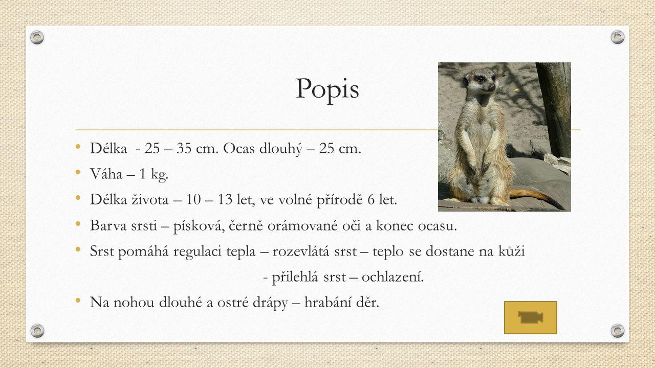 Popis Délka - 25 – 35 cm. Ocas dlouhý – 25 cm. Váha – 1 kg.