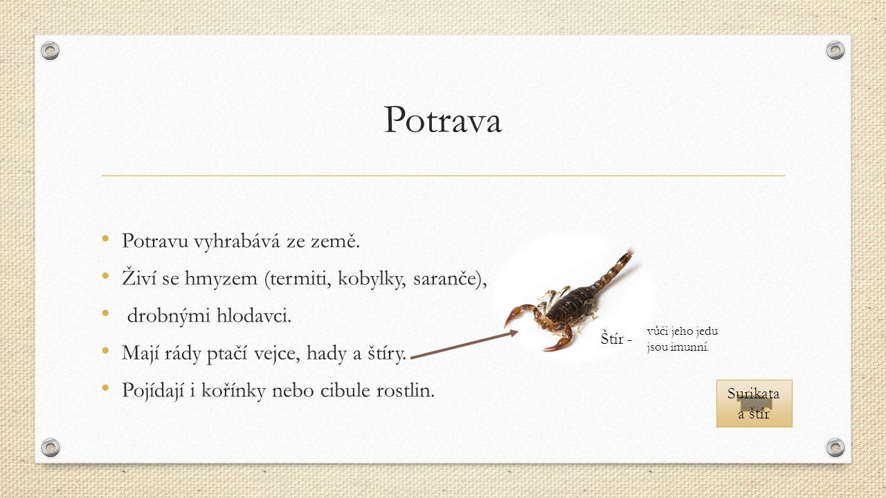 Potrava Potravu vyhrabává ze země. Živí se hmyzem (termiti, kobylky, saranče), drobnými hlodavci.
