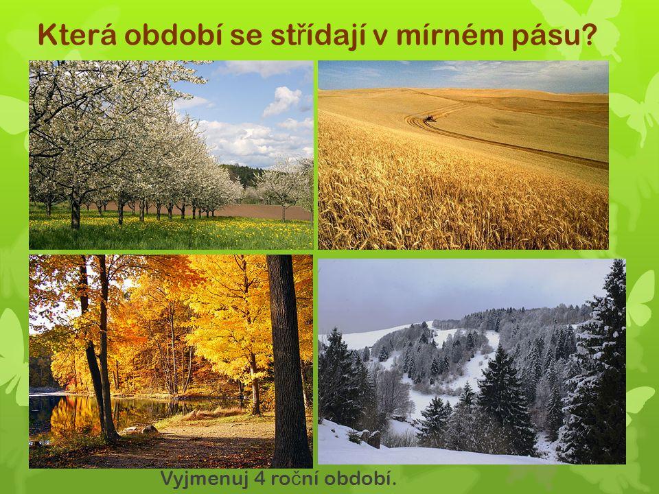 Jak jsou listnaté stromy p ř izp ů sobeny? Podzimním opadem list ů zamezují ztrátám vody.
