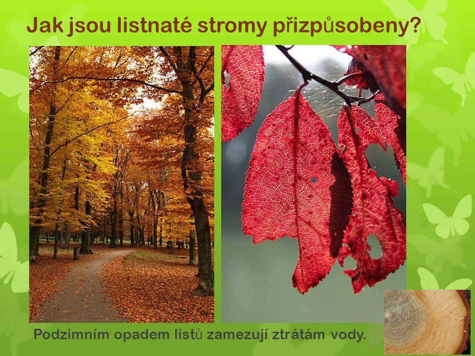 Jak jsou listnaté stromy p ř izp ů sobeny Podzimním opadem list ů zamezují ztrátám vody.