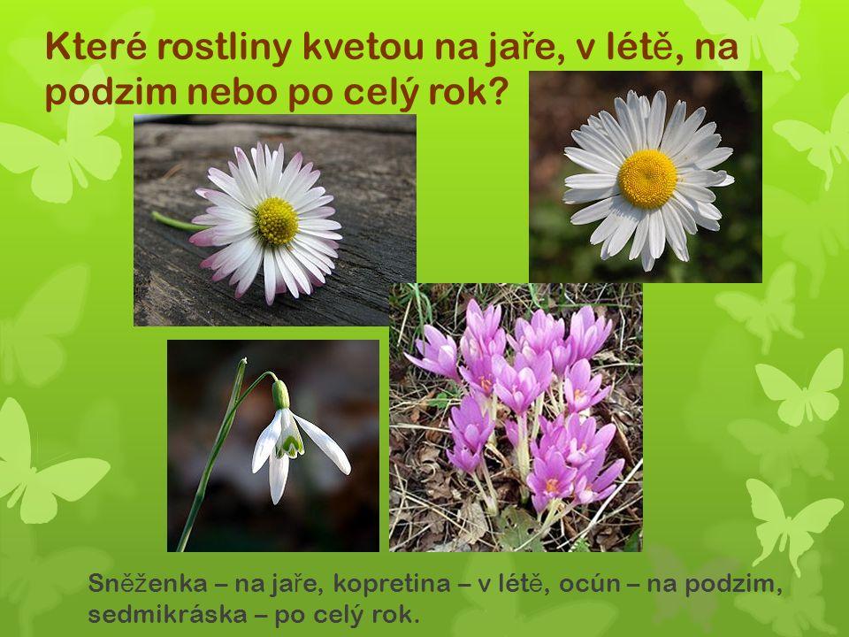 Které rostliny kvetou na ja ř e, v lét ě, na podzim nebo po celý rok.