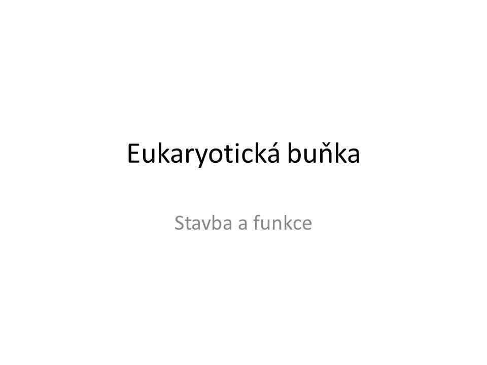 Eukaryotická buňka Stavba a funkce