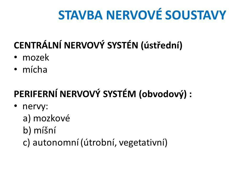 STAVBA NERVOVÉ SOUSTAVY CENTRÁLNÍ NERVOVÝ SYSTÉN (ústřední) mozek mícha PERIFERNÍ NERVOVÝ SYSTÉM (obvodový) : nervy: a) mozkové b) míšní c) autonomní (útrobní, vegetativní)