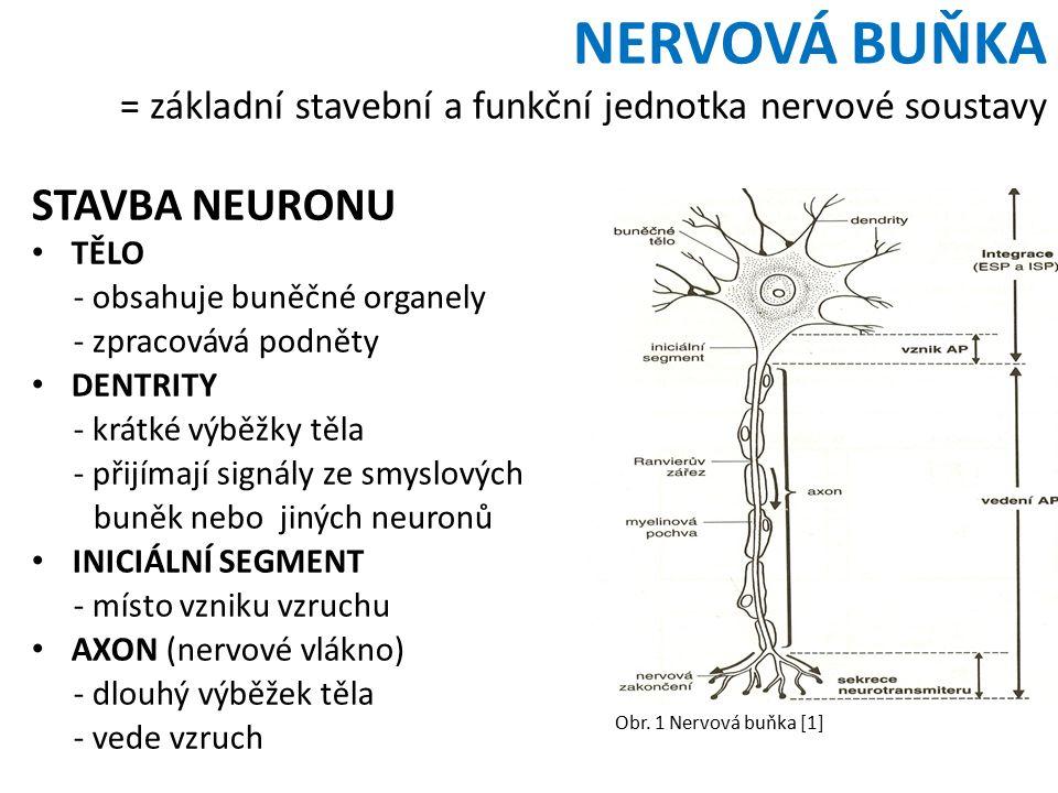 NERVOVÁ BUŇKA = základní stavební a funkční jednotka nervové soustavy STAVBA NEURONU TĚLO - obsahuje buněčné organely - zpracovává podněty DENTRITY - krátké výběžky těla - přijímají signály ze smyslových buněk nebo jiných neuronů INICIÁLNÍ SEGMENT - místo vzniku vzruchu AXON (nervové vlákno) - dlouhý výběžek těla - vede vzruch Obr.