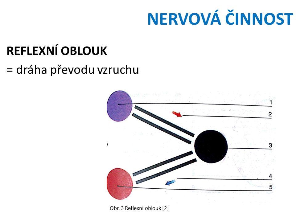 NERVOVÁ ČINNOST REFLEXNÍ OBLOUK = dráha převodu vzruchu Obr. 3 Reflexní oblouk [2]