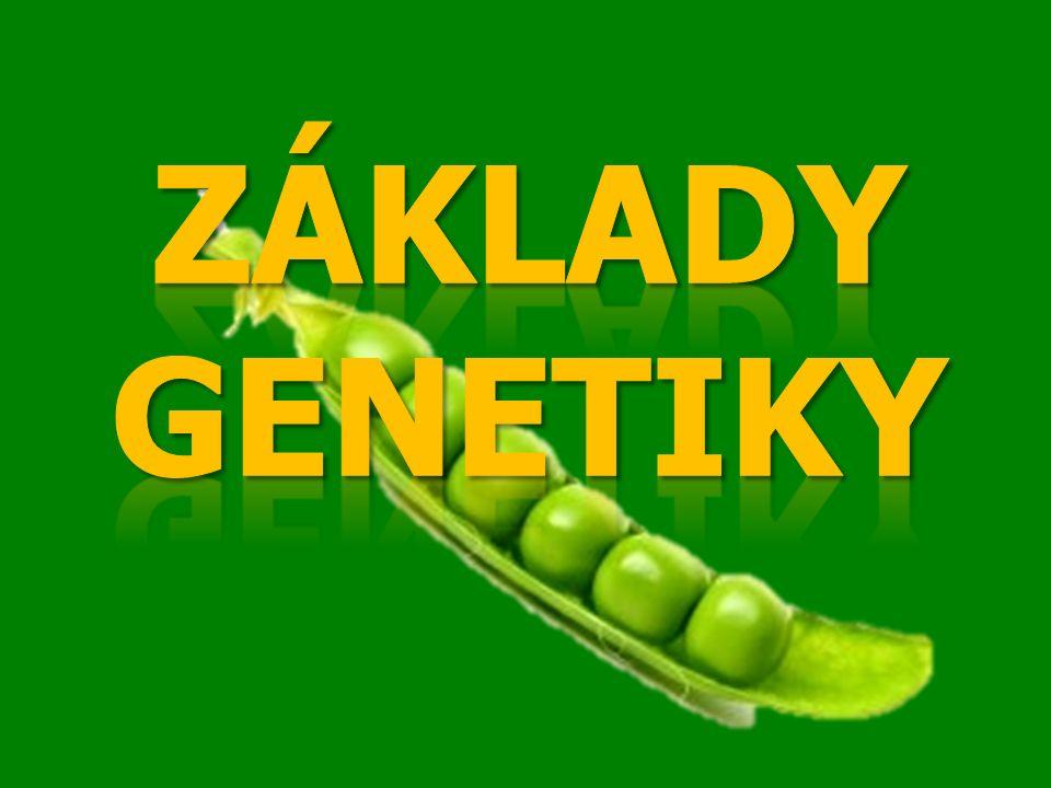 GENETIKA=VĚDA, KTERÁ SE ZABÝVÁ DĚDIČNOSTÍ A PROMĚNLIVOSTÍ ŽIVÝCH ORGANISMŮ GENETIKA = VĚDA, KTERÁ SE ZABÝVÁ DĚDIČNOSTÍ A PROMĚNLIVOSTÍ ŽIVÝCH ORGANISMŮ Dědičnost = přenos druhových vlastností z generace na generaci Proměnlivost (variabilita) = odlišnost mezi jednotlivci v rámci jednoho druhu