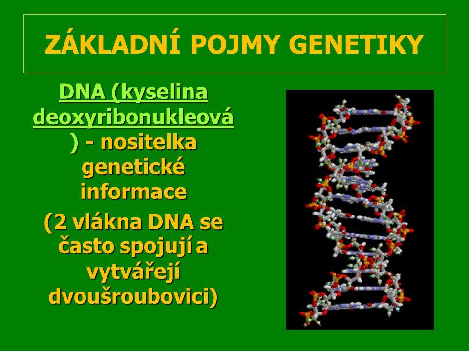 Chromozóm - pentlicovitý útvar - pentlicovitý útvar v jádře buňky obsahující DNA v jádře buňky obsahující DNA Gen (vloha) - základní jednotka genetické informace; úsek na chromozómu umožňující vznik určitého znaku nebo vlastnosti - základní jednotka genetické informace; úsek na chromozómu umožňující vznik určitého znaku nebo vlastnostiAlela – konkrétní forma genu (menší jednotka – geny se skládají z 2 alel) – konkrétní forma genu (menší jednotka – geny se skládají z 2 alel)