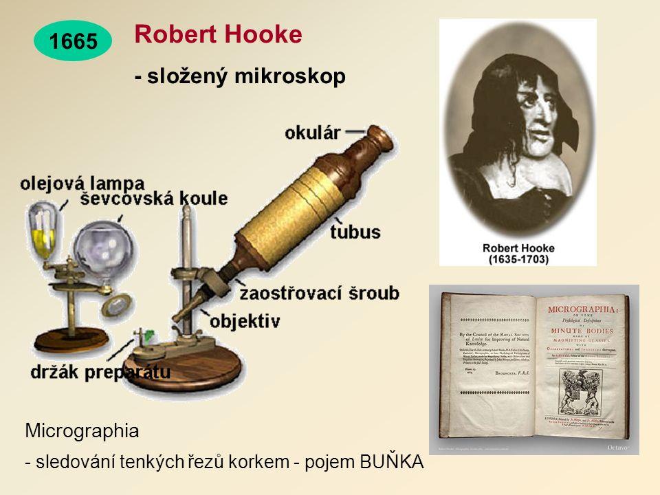 Robert Hooke - složený mikroskop 1665 Micrographia - sledování tenkých řezů korkem - pojem BUŇKA