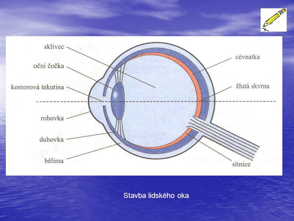 Komorová tekutina, oční čočka a sklivec tvoří spojnou optickou soustavu.