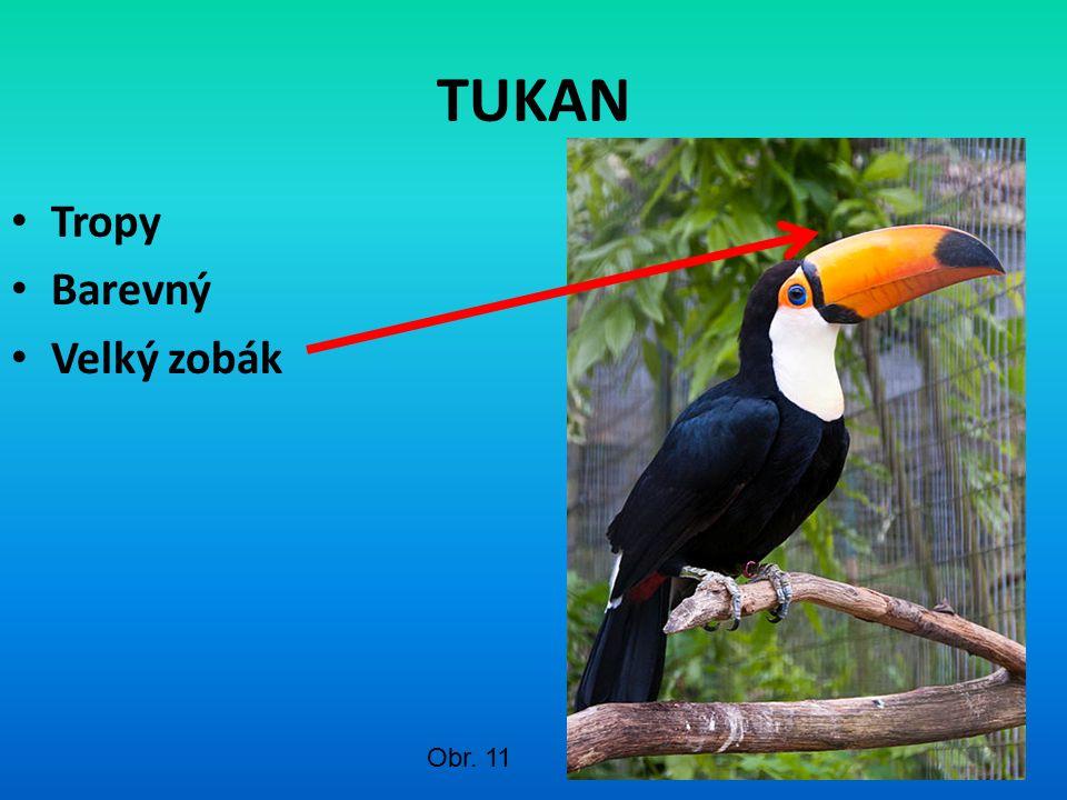 TUKAN Tropy Barevný Velký zobák Obr. 11