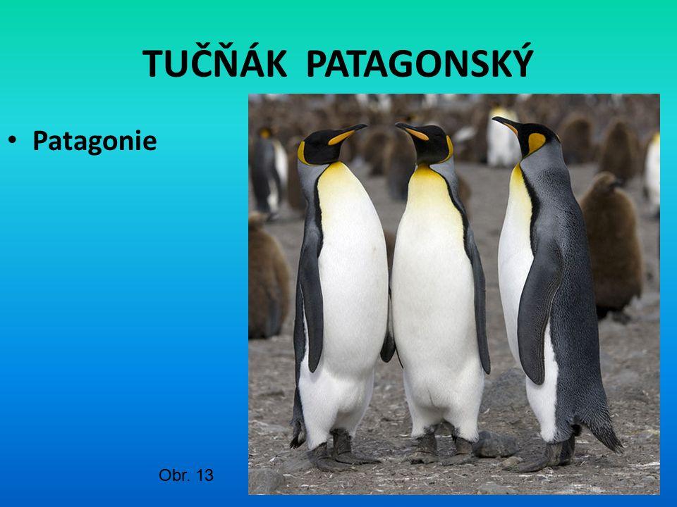 TUČŇÁK PATAGONSKÝ Patagonie Obr. 13