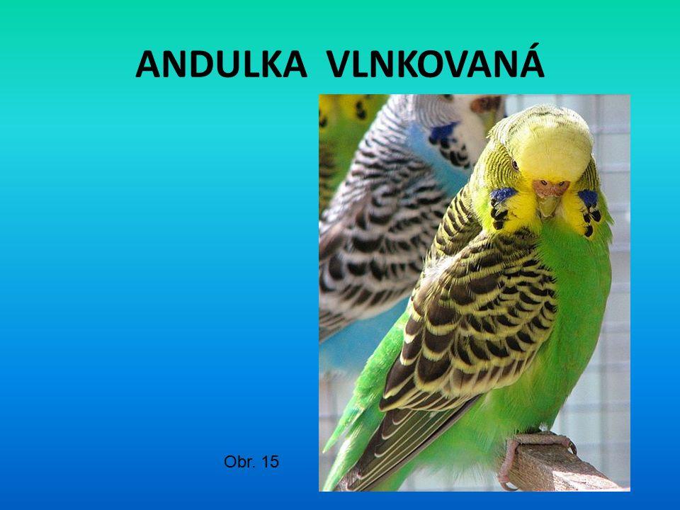 ANDULKA VLNKOVANÁ Obr. 15