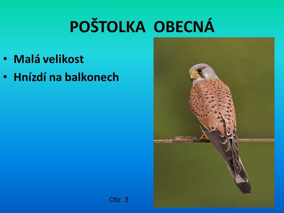 POŠTOLKA OBECNÁ Malá velikost Hnízdí na balkonech Obr. 3