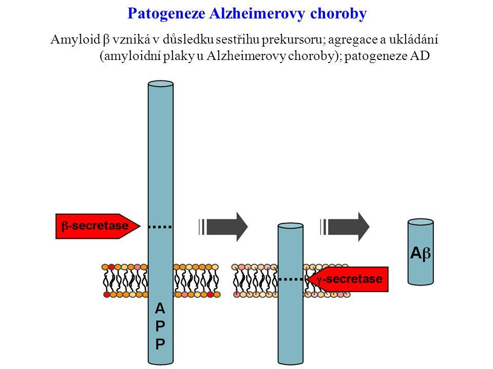 Patogeneze Alzheimerovy choroby Amyloid β vzniká v důsledku sestřihu prekursoru; agregace a ukládání (amyloidní plaky u Alzheimerovy choroby); patogeneze AD