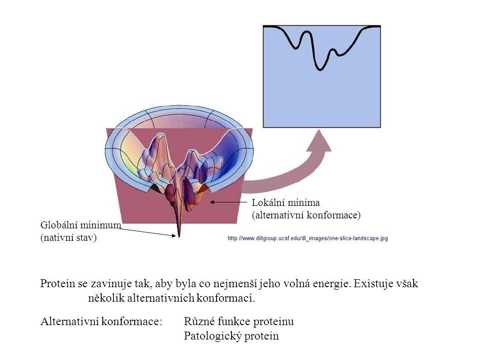 Globální minimum (nativní stav) Lokální minima (alternativní konformace) Protein se zavinuje tak, aby byla co nejmenší jeho volná energie.