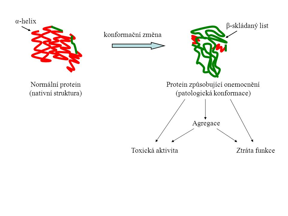 """Konformační změna:  změna sekundární, terciální a kvartérní struktury proteinu, aniž by se změnila primární struktura  bílkovina získává toxickou aktivitu nebo ztrácí přirozenou funkci """"Nemoci způsobené patologickou konformací proteinů  nemoci vyplývající z poruch konformace proteinů Struktura proteinů: primární, sekundární (α-helix, β-skládaný list), terciální Biologická úloha bílkovin závisí na terciální struktuře"""