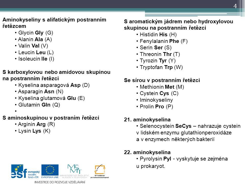 Aminokyseliny s alifatickým postranním řetězcem Glycin Gly (G) Alanin Ala (A) Valin Val (V) Leucin Leu (L) Isoleucin Ile (I) S karboxylovou nebo amidovou skupinou na postranním řetězci Kyselina asparagová Asp (D) Asparagin Asn (N) Kyselina glutamová Glu (E) Glutamin Gln (Q) S aminoskupinou v postraním řetězci Arginin Arg (R) Lysin Lys (K) S aromatickým jádrem nebo hydroxylovou skupinou na postranním řetězci Histidin His (H) Fenylalanin Phe (F) Serin Ser (S) Threonin Thr (T) Tyrozin Tyr (Y) Tryptofan Trp (W) Se sírou v postranním řetězci Methionin Met (M) Cystein Cys (C) Iminokyseliny Prolin Pro (P) 21.