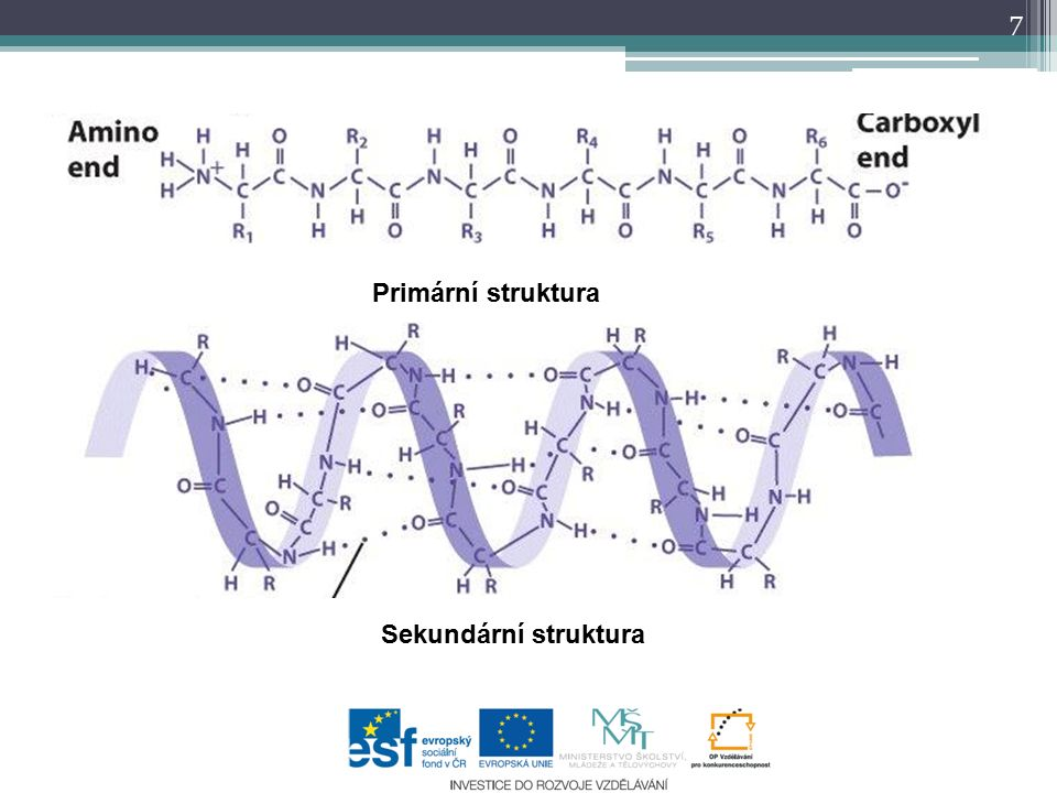 Primární struktura Sekundární struktura 7