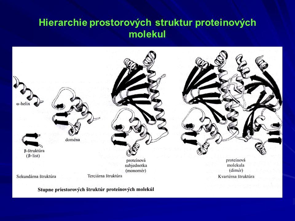 Hierarchie prostorových struktur proteinových molekul