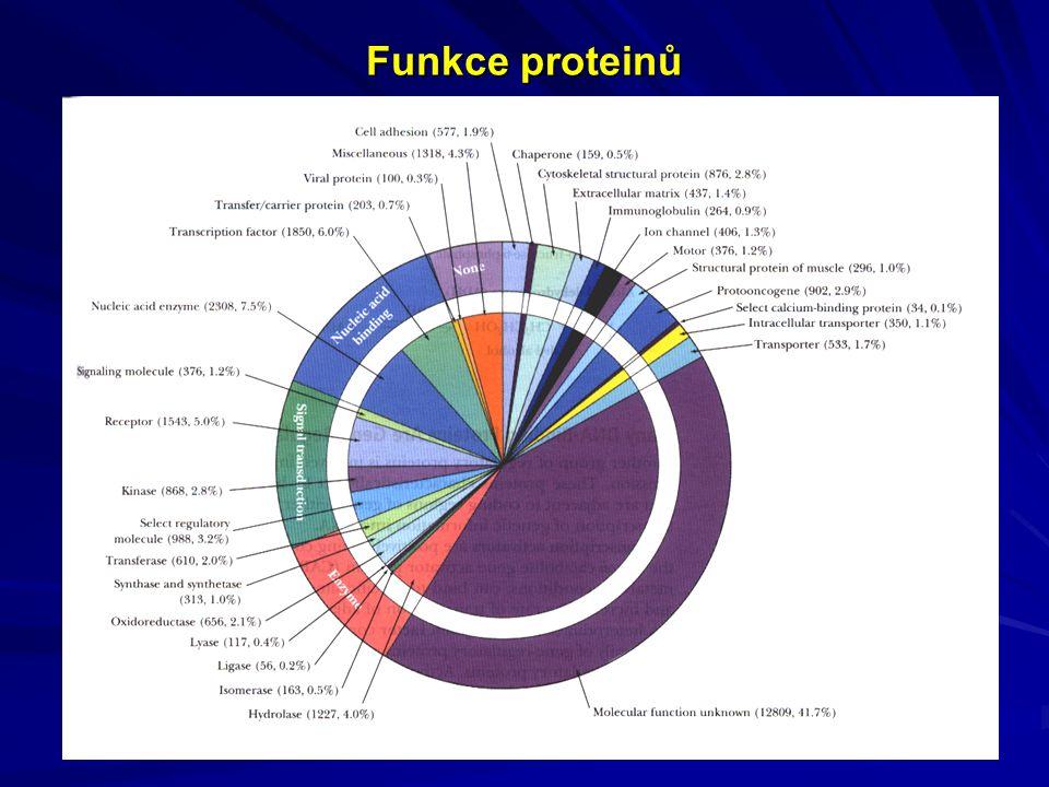 Funkce proteinů