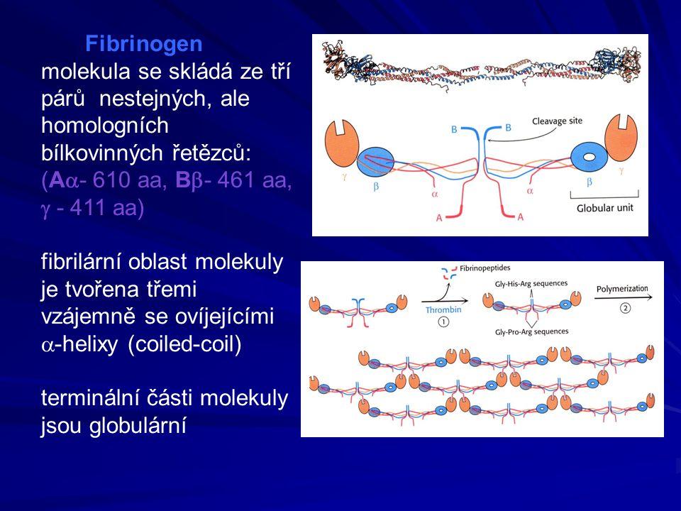 Fibrinogen molekula se skládá ze tří párů nestejných, ale homologních bílkovinných řetězců: (A  - 610 aa, B  - 461 aa,  - 411 aa) fibrilární oblast molekuly je tvořena třemi vzájemně se ovíjejícími  -helixy (coiled-coil) terminální části molekuly jsou globulární