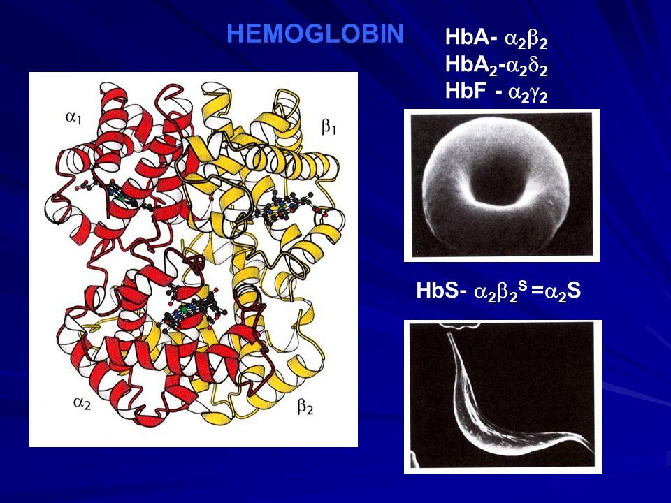 HEMOGLOBIN HbA-  2  2 HbA 2 -  2  2 HbF -  2  2 HbS-  2  2 S =  2 S