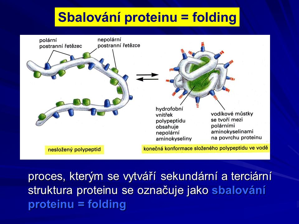 Sbalování proteinu = folding proces, kterým se vytváří sekundární a terciární struktura proteinu se označuje jako sbalování proteinu = folding
