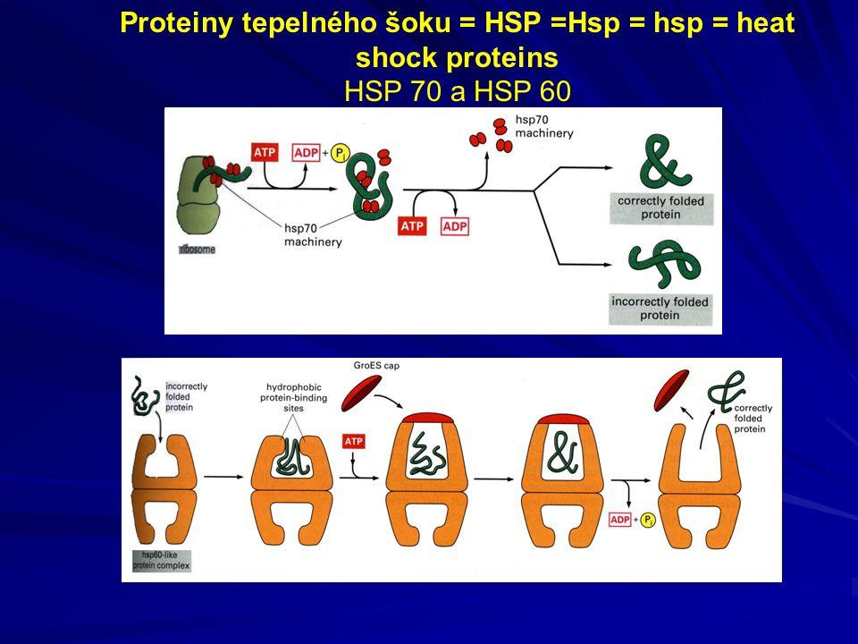 Proteiny tepelného šoku = HSP =Hsp = hsp = heat shock proteins HSP 70 a HSP 60