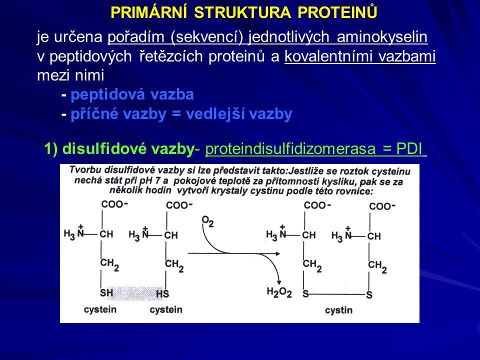 PRIMÁRNÍ STRUKTURA PROTEINŮ je určena pořadím (sekvencí) jednotlivých aminokyselin v peptidových řetězcích proteinů a kovalentními vazbami mezi nimi - peptidová vazba - příčné vazby = vedlejší vazby 1) disulfidové vazby- proteindisulfidizomerasa = PDI