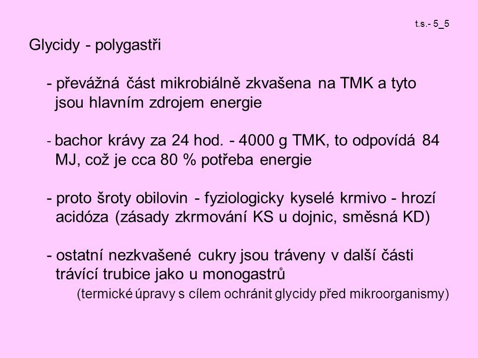 t.s.- 5_5 Glycidy - polygastři - převážná část mikrobiálně zkvašena na TMK a tyto jsou hlavním zdrojem energie - bachor krávy za 24 hod.